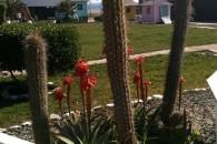 Vista jardin de cactus